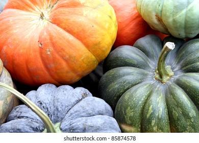 Fall harvest at the Nashville Farmers Market