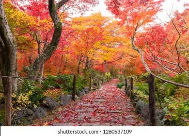 Fall of Hokyoin temple, Kyoto, Japan