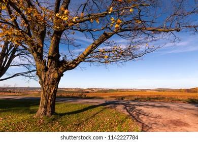 A fall landscape.