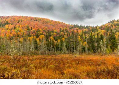 Fall landscape colors on a rainy bleak day in cottage country, Quebec, Canada.
