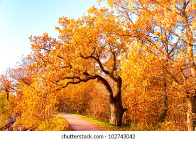 Fall Landscape Falling Leaves