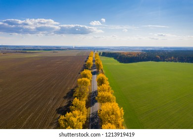 Fall landscape. Road under blue clear sky. Transportation background. Travel background. Sunny autumn aerial view. Fall nature. Clear horizon.
