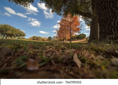 Fall landscape w/ cypress trees