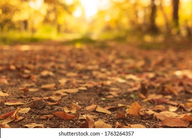 Fall landscape in yellow, country road with fallen dry leaves in the autumn forest at sunny day, front focus, low angle