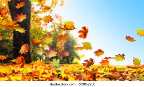 fall leaf in autumn, maple leaves falling down from tree against blue sky, cheerful autumn day in a forest landscape as autumn background