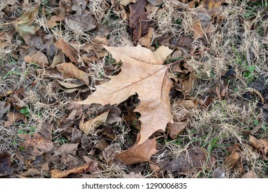 Fall leaf Background -  Autumn Leaves on the ground