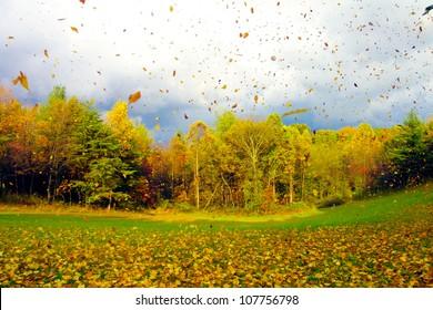 Fall Leaf Blow in Ohio