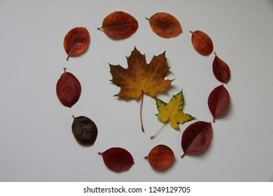 fall leaf circle