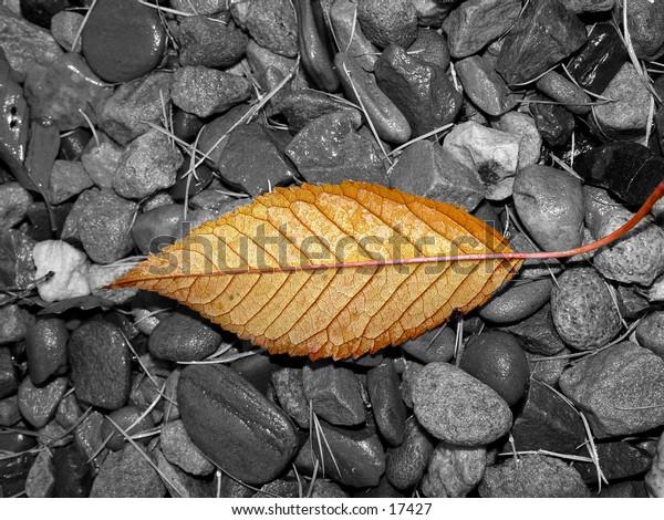 Fall leaf on wet stones