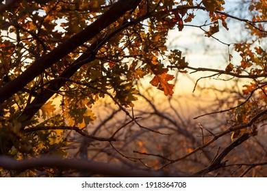 Herbstblätter mit schönem Sonnenuntergang