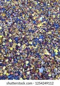 Fall leafs on ground.