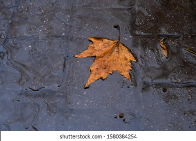fall leave in water, floating autumn leaf. Fall season leaves in rain. October weather, november nature background. Beautiful reflection in water