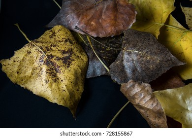 Fall leaves against a black background