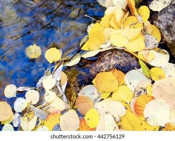 Fall leaves along a stream