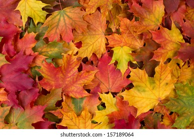 Fall leaves background - Shutterstock ID 157189064