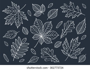 Fall of the leaves. A big set of autumn leaves of different tree species. Autumn leaves are drawn with chalk on the black chalkboard. Sketch, design elements.