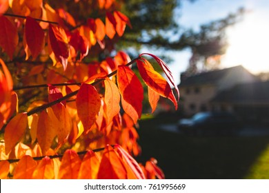 Fall Leaves and Bushes