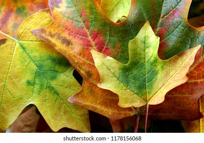 Fall Leaves of Different Colors lying in a Pile.