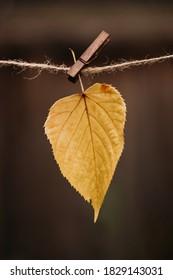 Feuilles automnales suspendues sur une corde à linges, concept d'automne, mise au point sélective