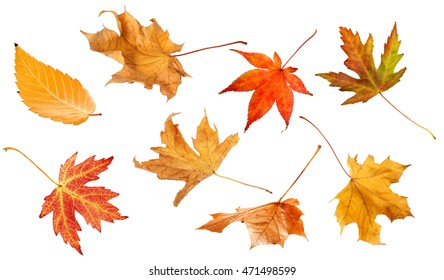 Fall leaves isolated on white background collage