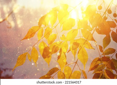 fall leaves and light burst. filtered image