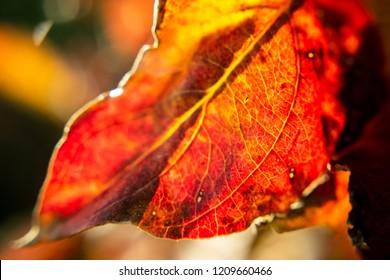 Fall leaves macro