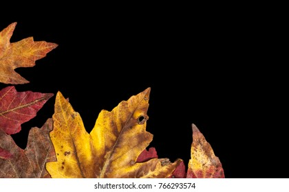 Fall leaves on black background