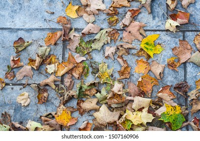 Fall leaves on blue concrete