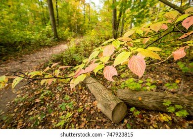 Fall leaves on a forest pathway.