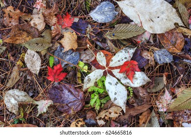 Fall leaves on the forrest floor