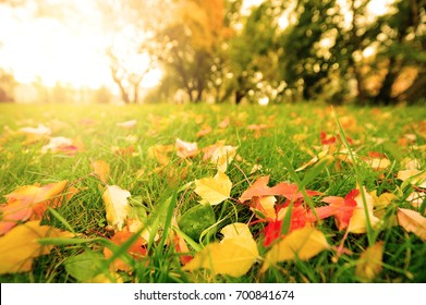 Fall leaves on meadow in autumn.