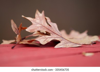 Fall Leaves on a Red Table with Shallow Depth of Focus