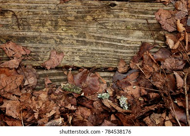 Fall leaves on weathered wooden planks-lower half circle