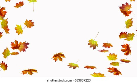 fall leaves on white background