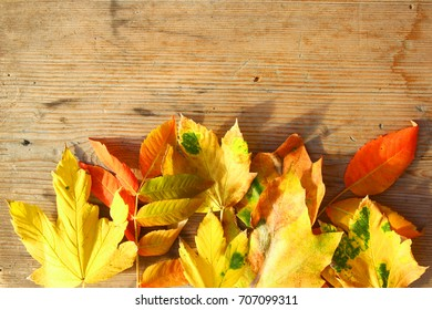 Fall leaves on wooden table