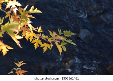 Fall leaves over river