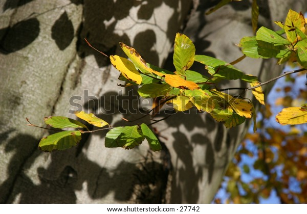 Fall leaves with prominent shadows and blue sky backdrop