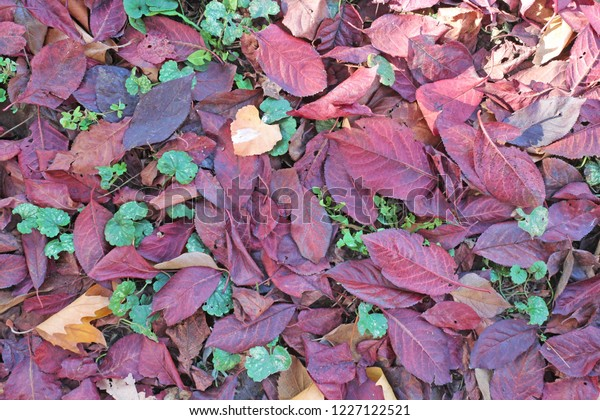 Fall Leaves Purple Orange On Green Stock Photo Edit Now 1227122521
