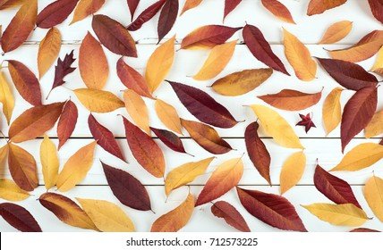 Fall Leaves Still Life Display that is pretty with natural warm tones.  Leaves cover the Rustic Shiplap wood Board Background for a wallpaper or background.  It's horizontal banner but works vertical
