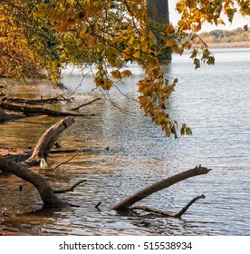 Fall leaves and submerged logs on the river bank along the Warrior river in Tuscaloosa Alabama