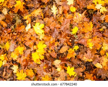 Fall Leaves Texture