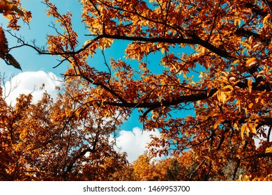Fall leaves in a tree in autumn against a blue sky