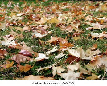Fall leaves from a tree on a green lawn