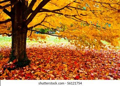 fall leaves trees