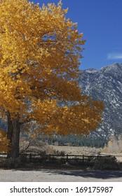 Fall magnificence set against Sierra Nevada backdrop, NV