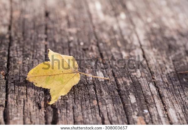 A fall maple leaf sitting on old deck wood.