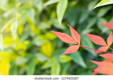 Fall mood. Red leaves background for web site banner.