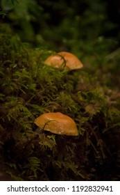 Fall Mushroomsin Alaska