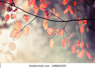Fall nature background with autumn colorful leaves in vintage color opendoor