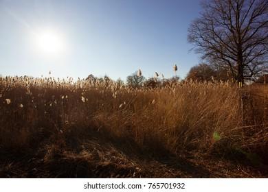 Fall Ojibway Tallgrass Prairie